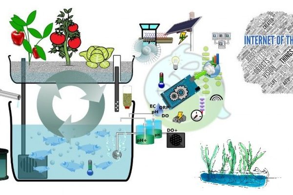IOT-Agriculture-Aquaponics-Reality-check-660x400